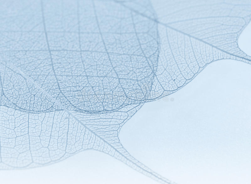 Download Blue decorative leaves stock image. Image of decor, structure - 12740575