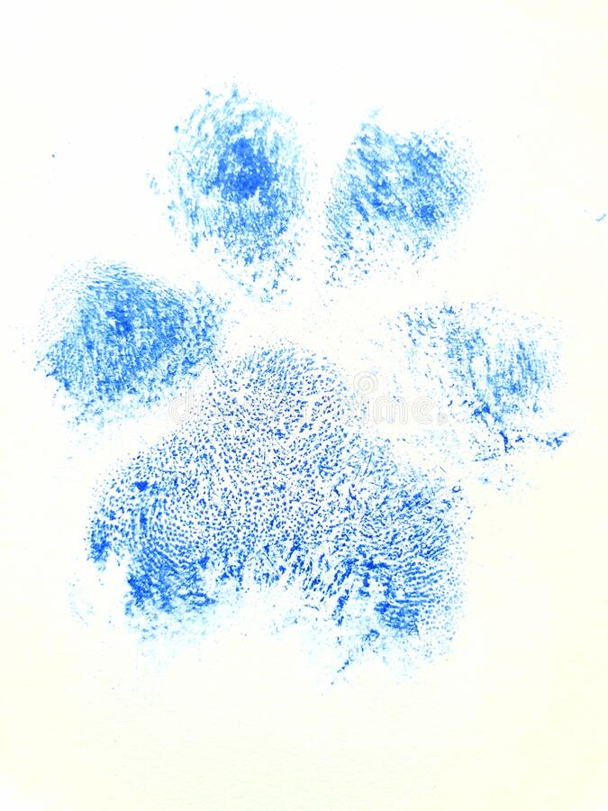 Blue Dog paw print showing pads royalty free stock images