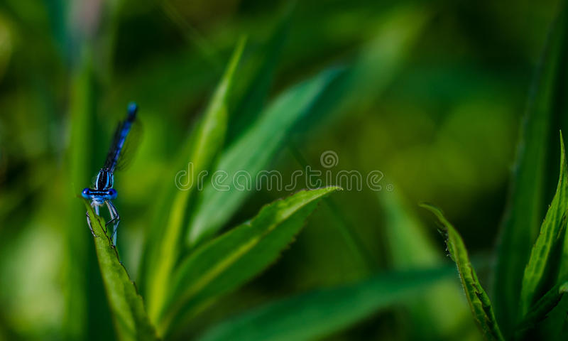 Blue Dragonfly On Green Leaf In Selective Focus Photography Free Public Domain Cc0 Image