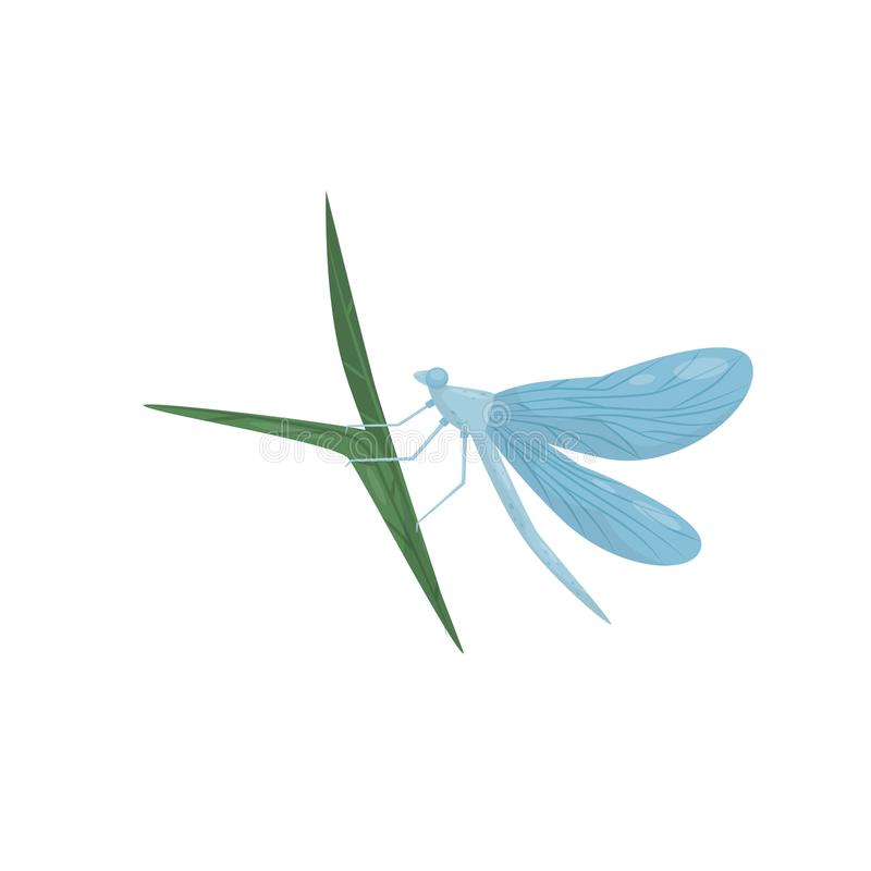 Blue dragonfly sitting on green leaf. Flying insect with long body and two pairs of wings. Flat vector icon. Small blue dragonfly sitting on green leaf. Flying stock illustration