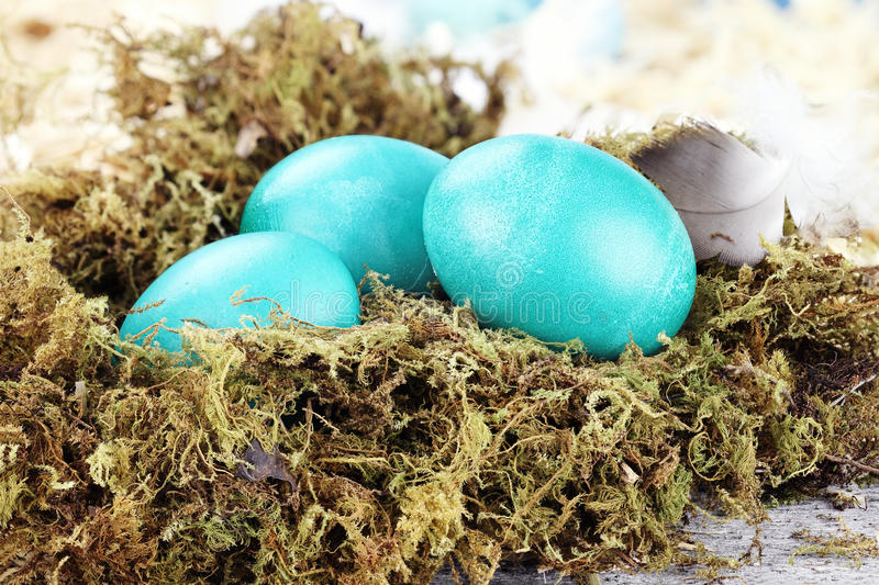 Blue Easter Eggs. Blue colored Easter eggs lying on a rustic background in a nest of moss stock photography