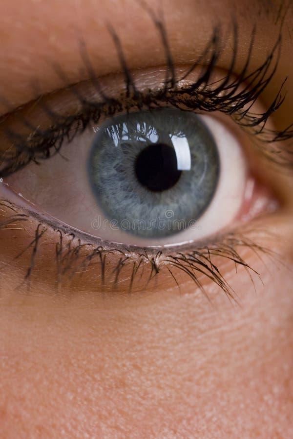 Blue Eye Royalty Free Stock Image