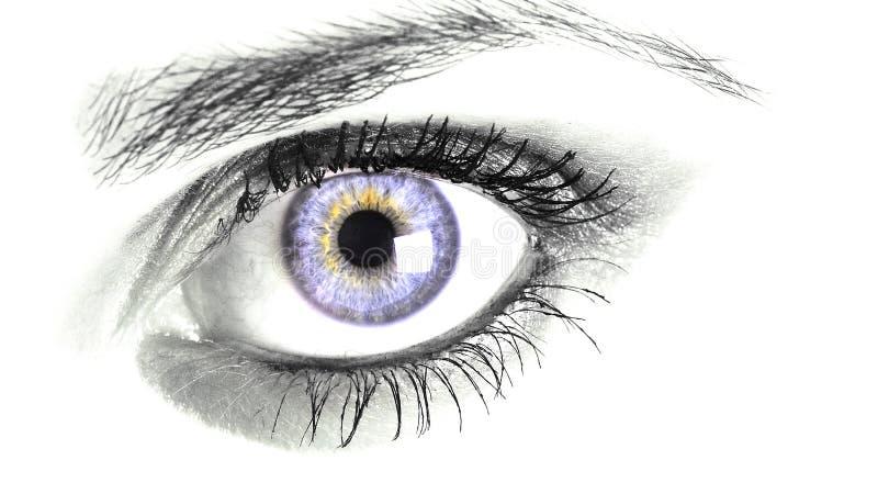 Blue eye. Close up of blue eye