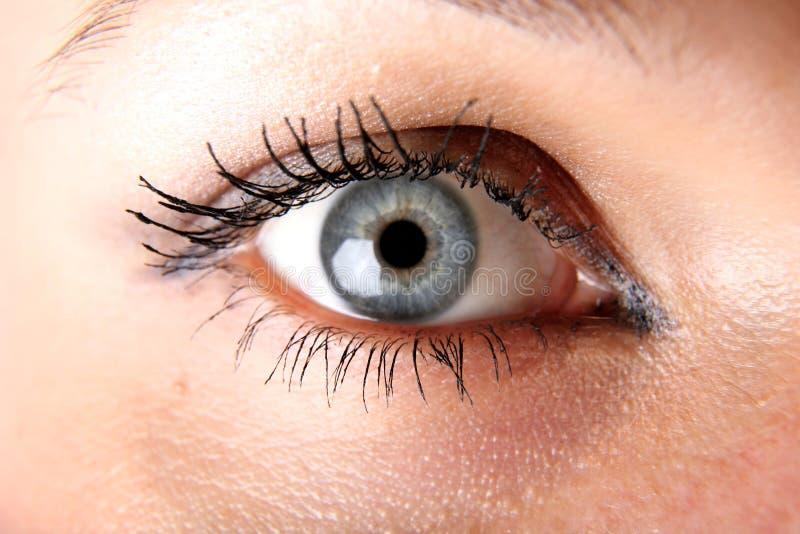 Download Blue eye stock image. Image of gaze, vogue, shiny, fashion - 8773929