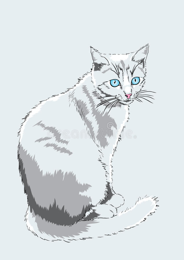 Download Blue-eyed cat. stock vector. Illustration of claws, beautiful - 20474116