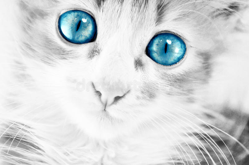 Download Blue eyes stock photo. Image of laying, face, postcard - 14969252