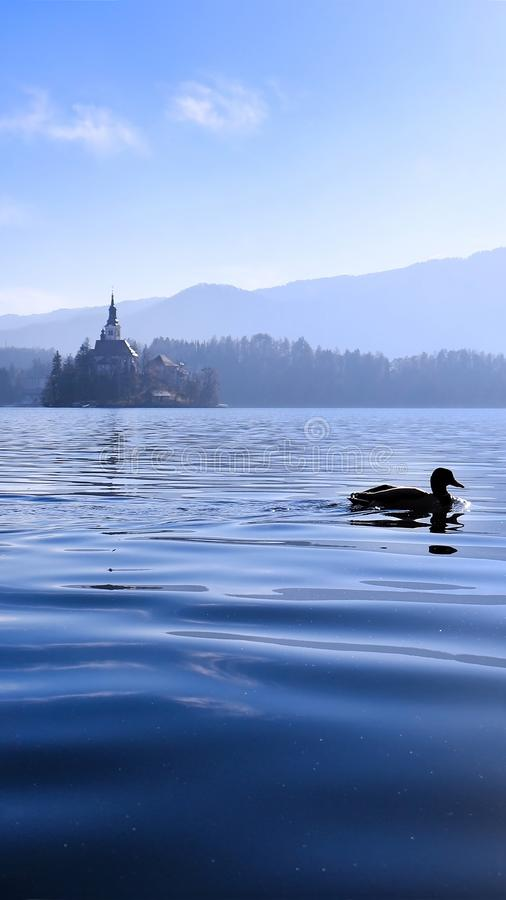 Blue Fairytale. Duck swimming in Lake Bled with the Church of the Assumption island in the background, like a fairytale