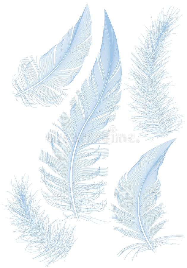 Blue feather vector illustration