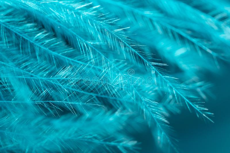 Blue feather as an abstract background royalty free stock photo