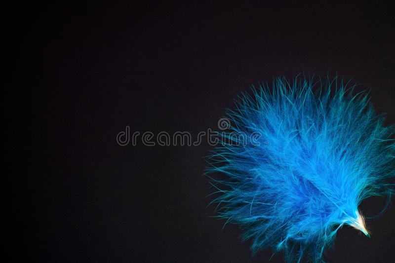 Blue feather on black background. stock photography