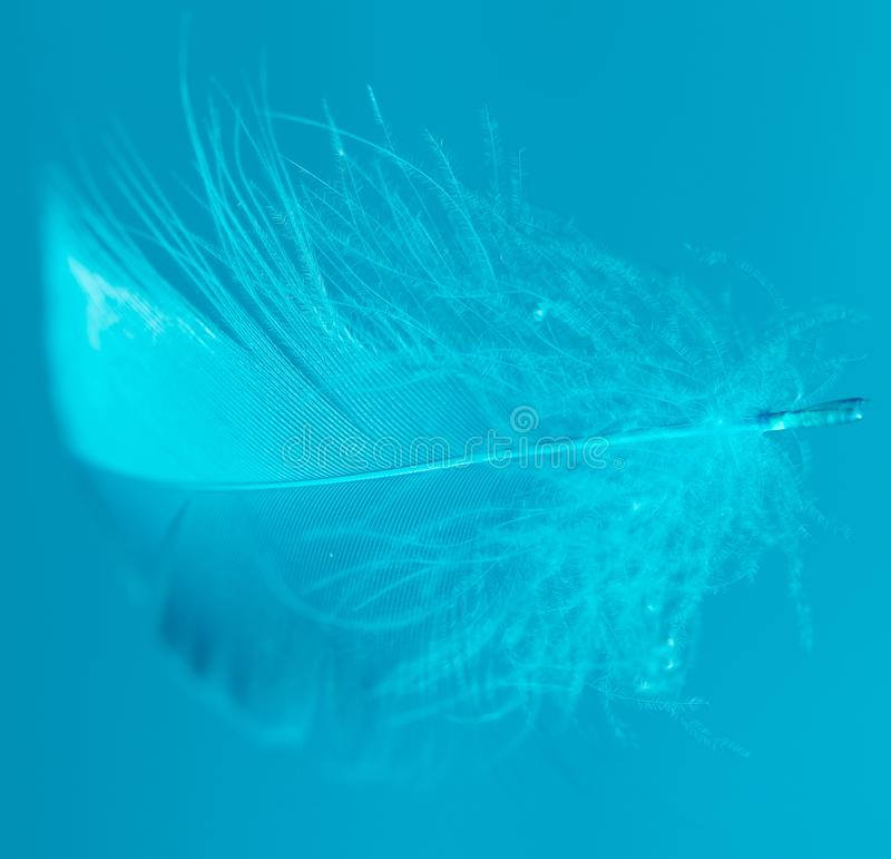 Blue feather on blue background royalty free stock image
