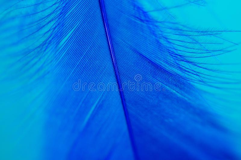 Blue feather on blue background stock photography