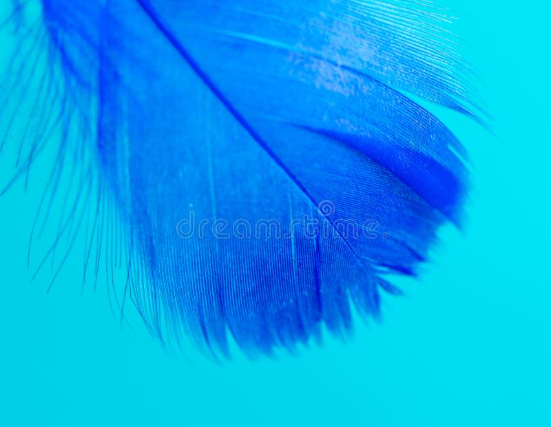 Blue feather  on blue background stock photo
