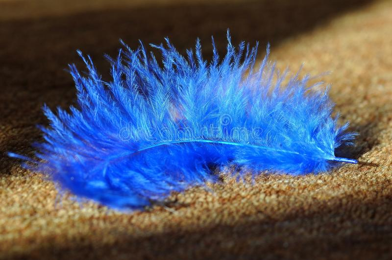Blue, Feather, Close Up, Macro Photography stock photography