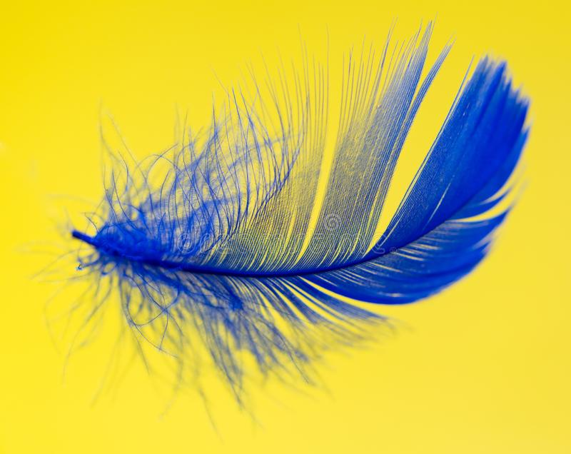Blue feather isolated on yellow background.  stock images