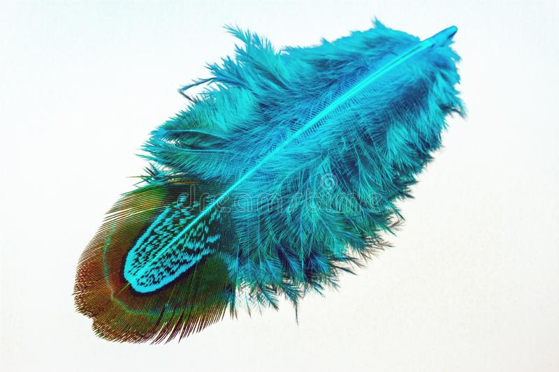 Blue Feather over white background stock photos