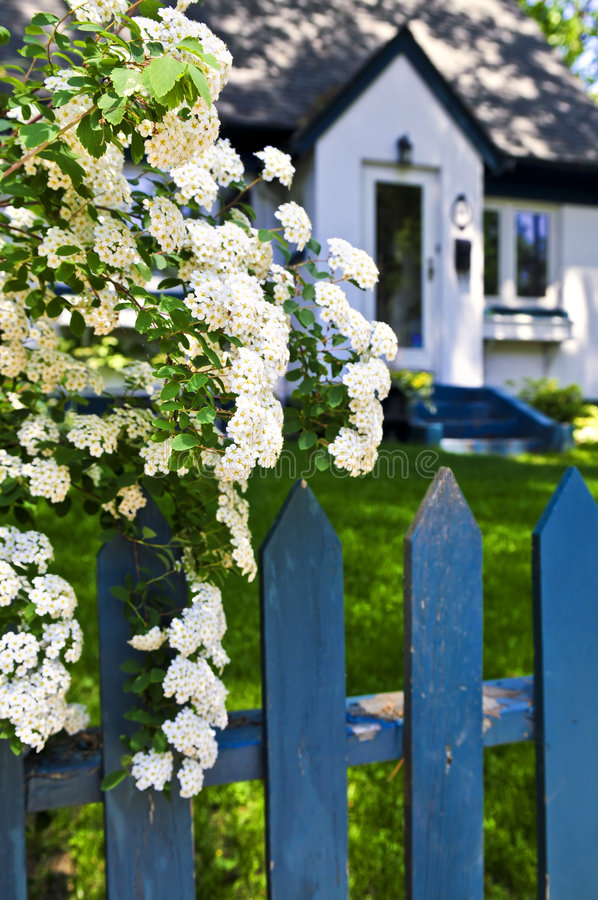 Free Blue Fence With White Flowers Stock Photography - 5569752