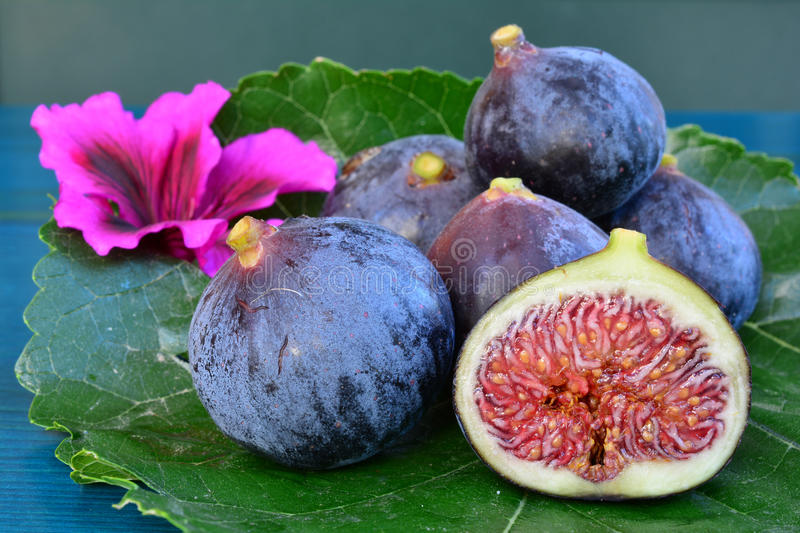 Blue fig cross section. Blue figs on a leaf and pink flower, fig cross section, close up, side view royalty free stock photography