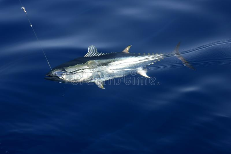 Download Blue Fin Tuna Mediterranean Fishing And Release Stock Image - Image: 9912993