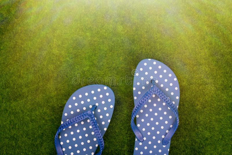 flip flops in white polka dots on the grass meadow stock photos