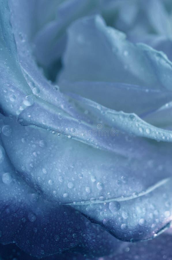 Download Blue flower stock photo. Image of droplets, wedding, alive - 187336