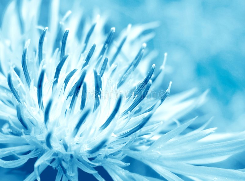 Download Blue Flower Royalty Free Stock Photos - Image: 2242578