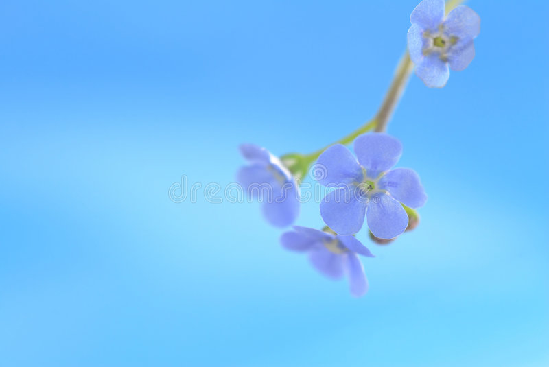 Download Blue flower stock image. Image of romance, aroma, colorful - 2323737