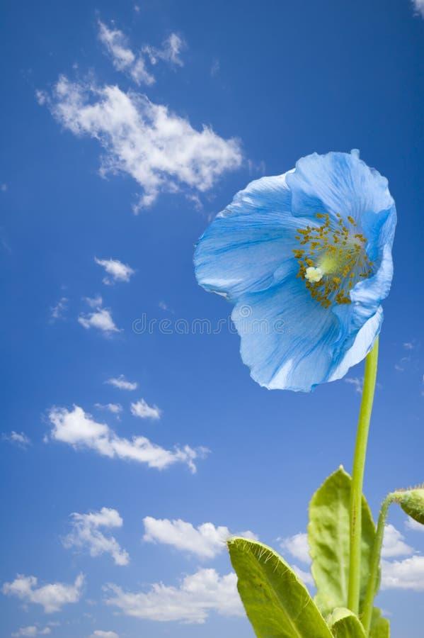 Download Blue flower stock photo. Image of detail, closeup, beautiful - 2469186