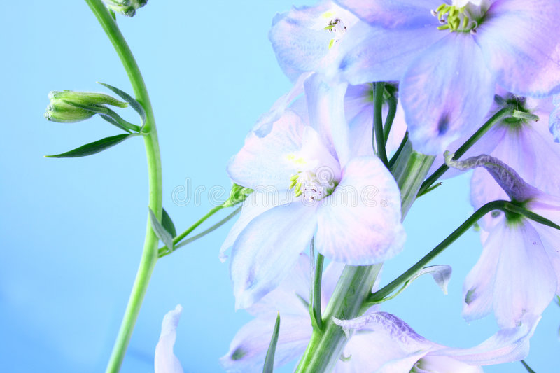 Download Blue flower stock image. Image of natural, close, bouquet - 2523675