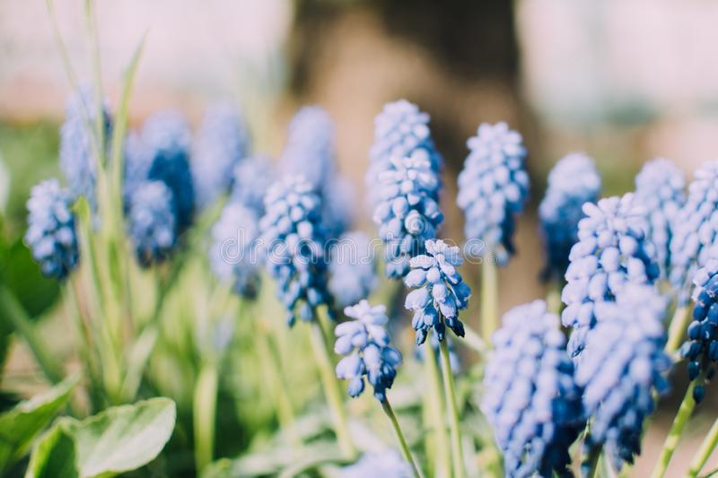 Blue Flower Buds During Daytime Free Public Domain Cc0 Image