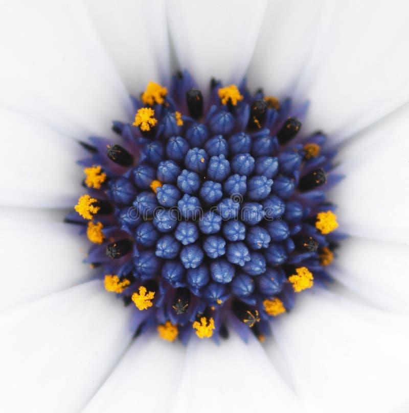 Blue flower center stock image