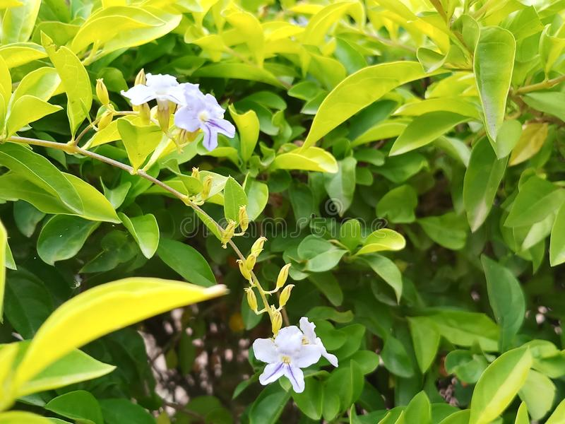 Blue Flower with leaves. Little flowers in Green leaves stock photo