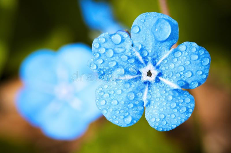 Blue, Flower, Macro Photography, Flora