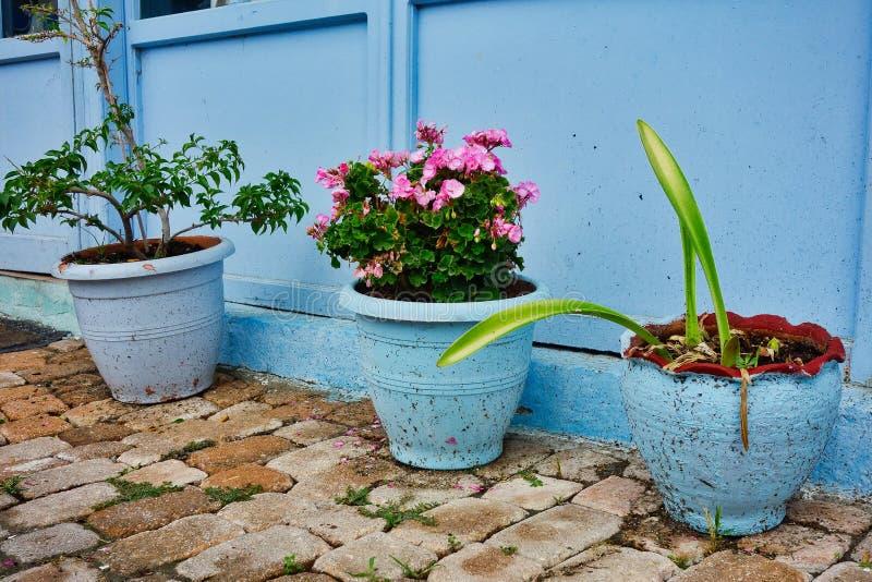 Blue Flower Pots Near Blue Wall royalty free stock image
