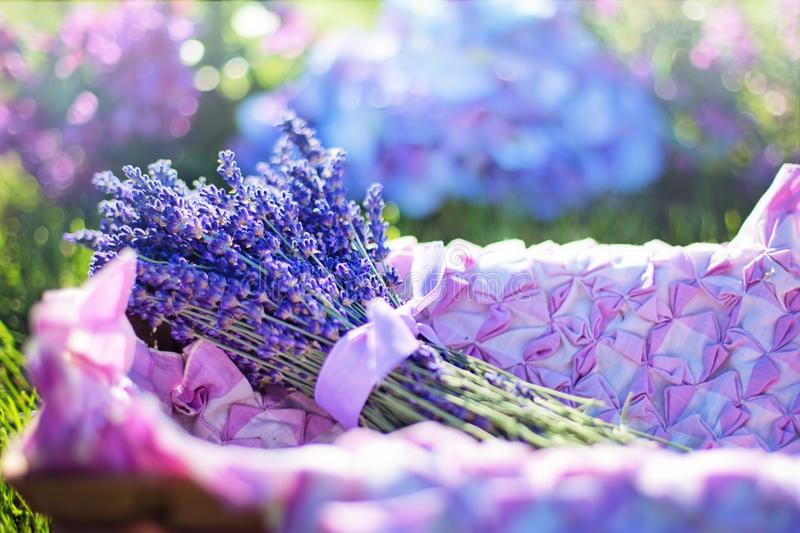 Blue, Flower, Purple, Lilac royalty free stock photography
