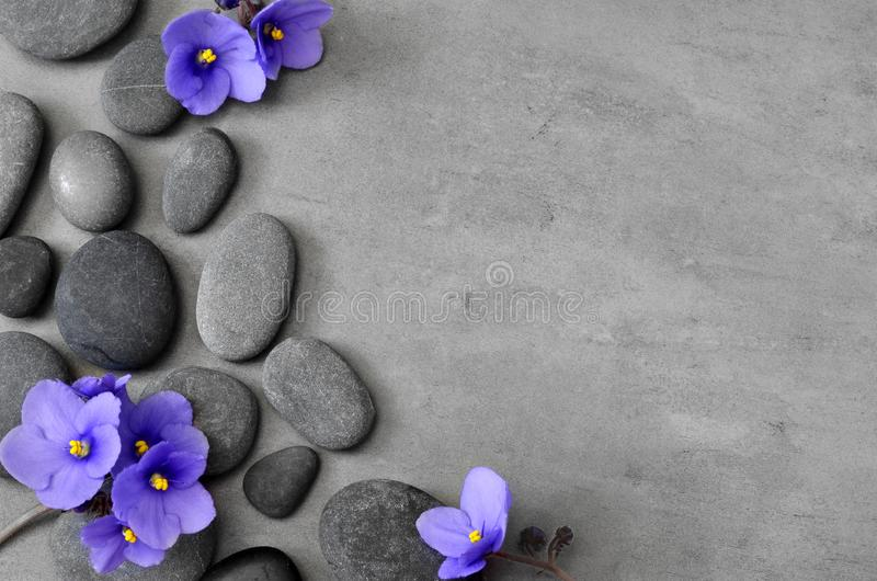Blue flower and stone zen spa on grey background stock photography