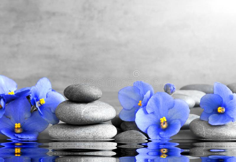 Blue flower and stone zen spa on grey background.  royalty free stock photo