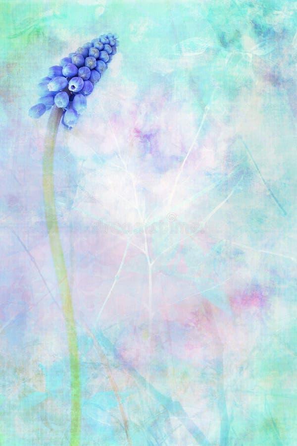 Blue flowering Grape Hyacinth dreamy background. Blue flowering Grape Hyacinth dreamy blue background stock illustration