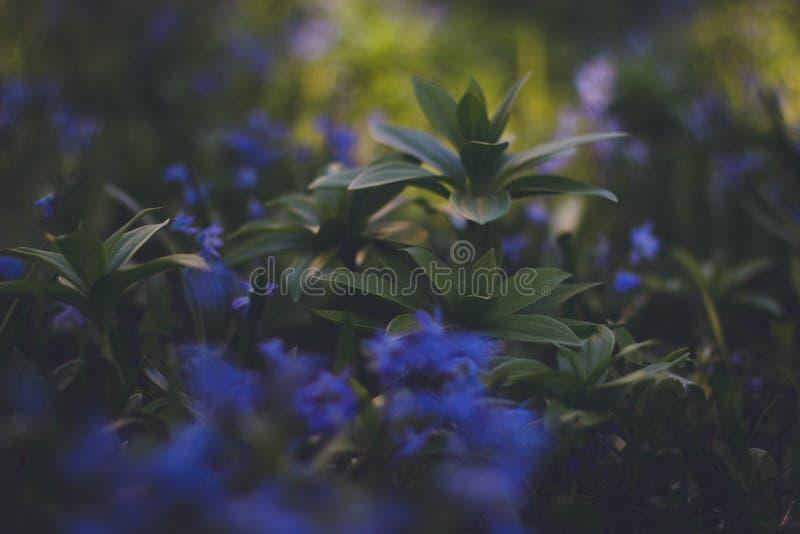 Blue Flowering Green Plaant Free Public Domain Cc0 Image