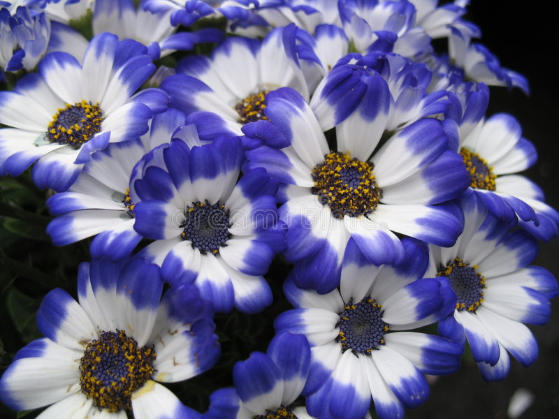 Download Blue flowers stock photo. Image of decorative, botanical - 1211734