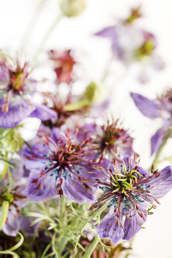 Download Blue Flowers Stock Photo - Image: 26873420