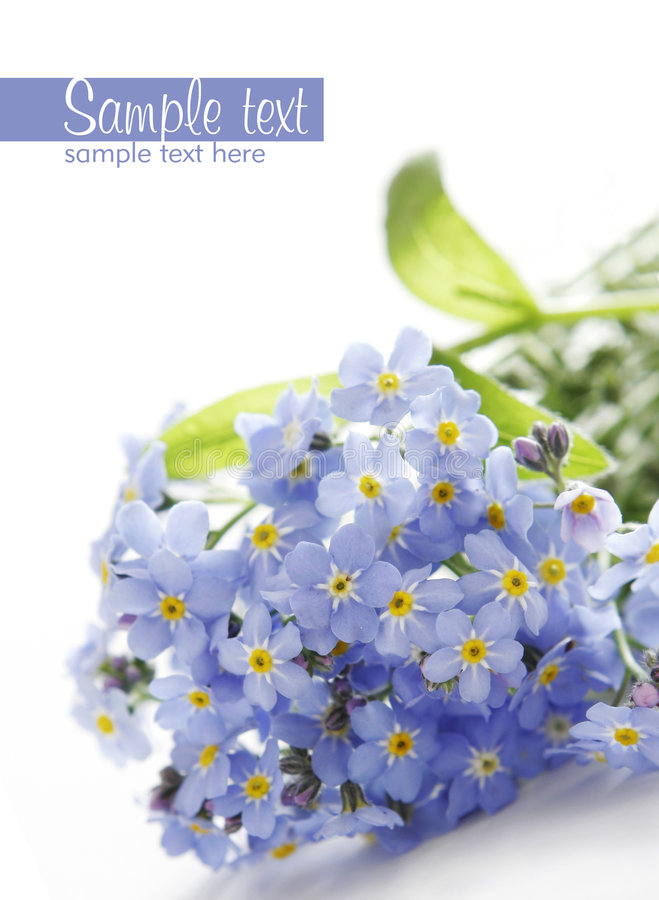 Download Blue Flowers stock photo. Image of text, delicate, beautiful - 6655558