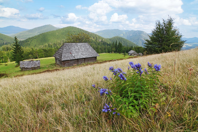 Download Blue Flowers On A Background Of Landscape. Stock Image - Image: 26725467