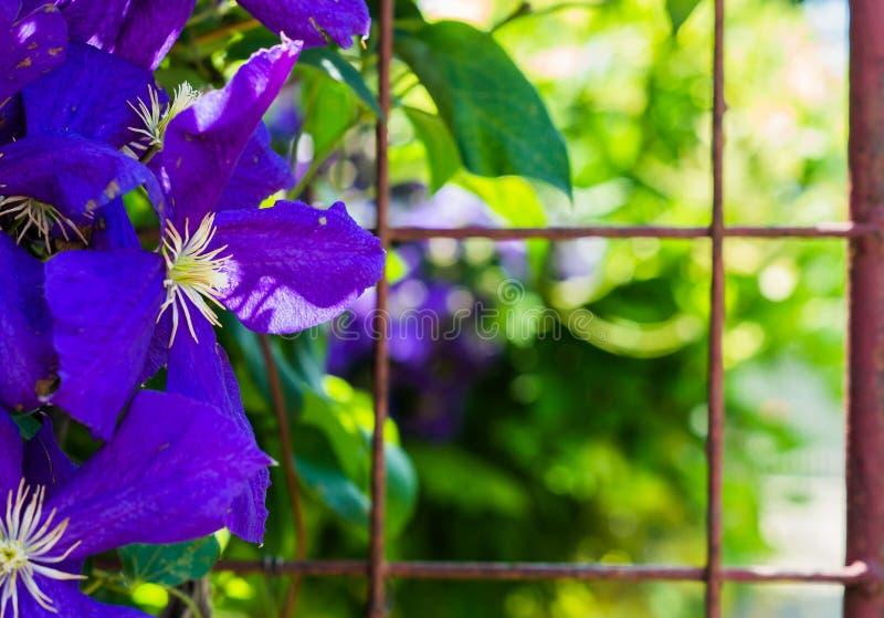 Blue flowers background photo stock image