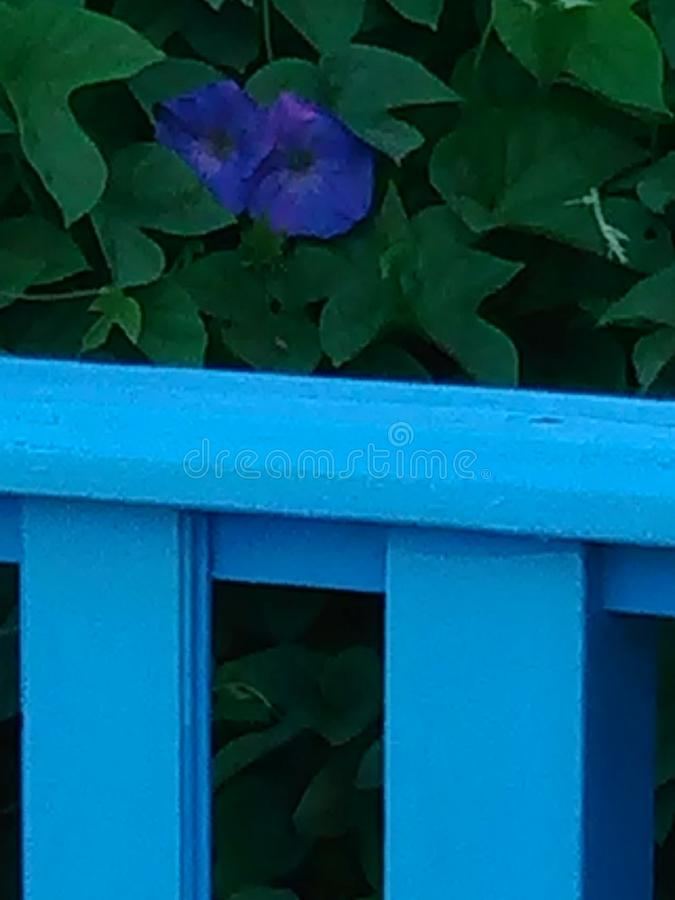 Blue stock photography