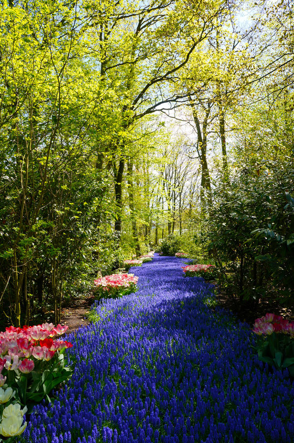 Download Blue flowers in the forest stock photo. Image of flowers - 25232596