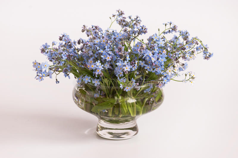 Blue flowers Myosotis, bouquet royalty free stock images