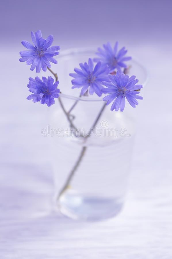Blue flowers in a transparent glass. Soft selective focus royalty free stock photo