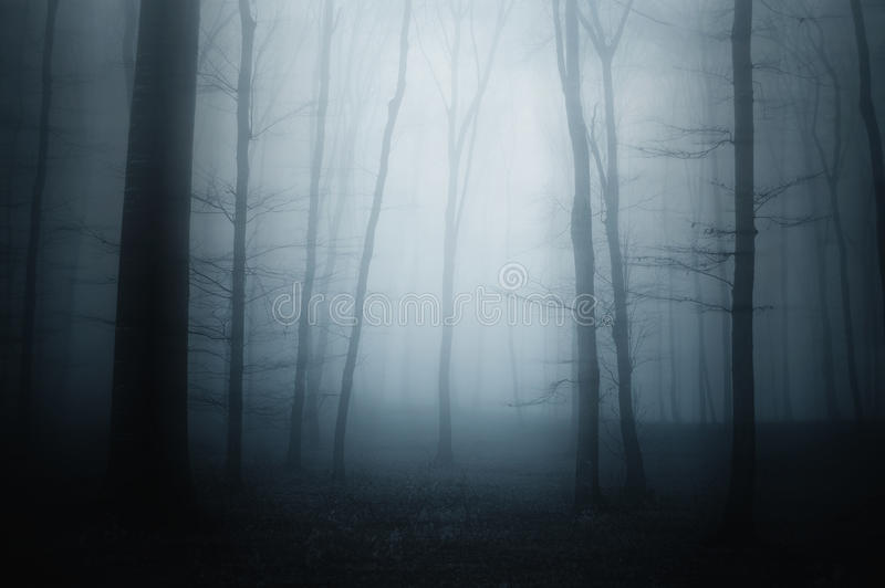 Blue fog in scary forest royalty free stock photo
