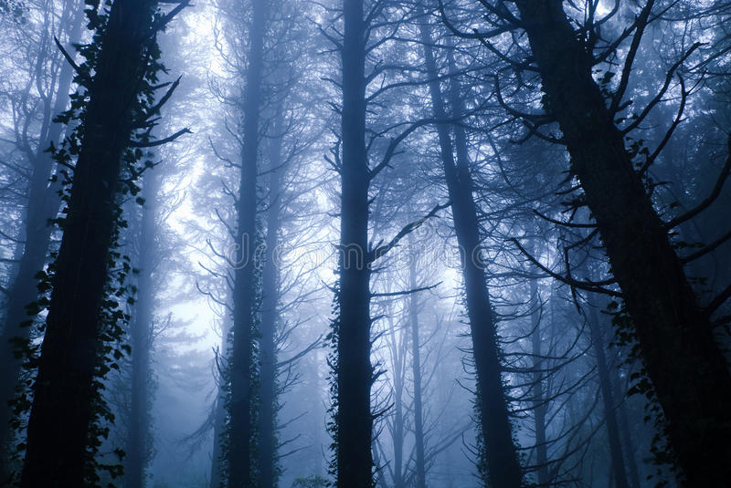 Blue Forest stock photos